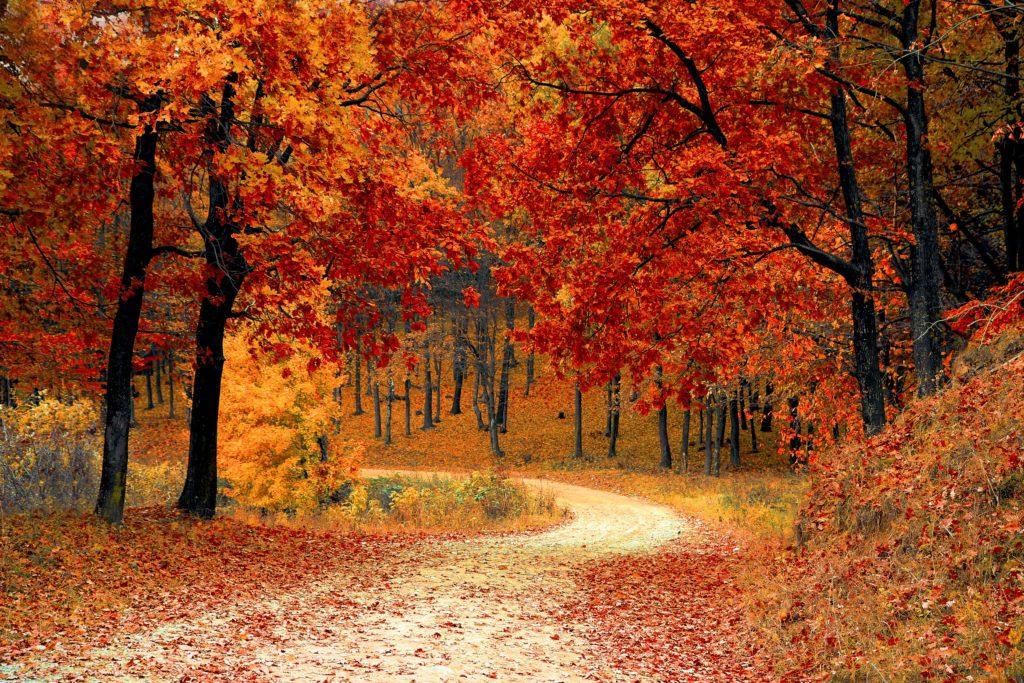 efterårssæson